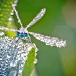 Kletsnatte insecten vliegen niet weg, laten zich makkelijk fotograferen