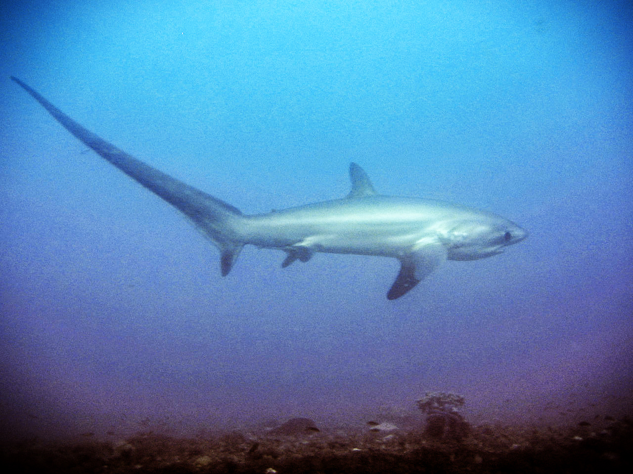 Threshershark2 feat