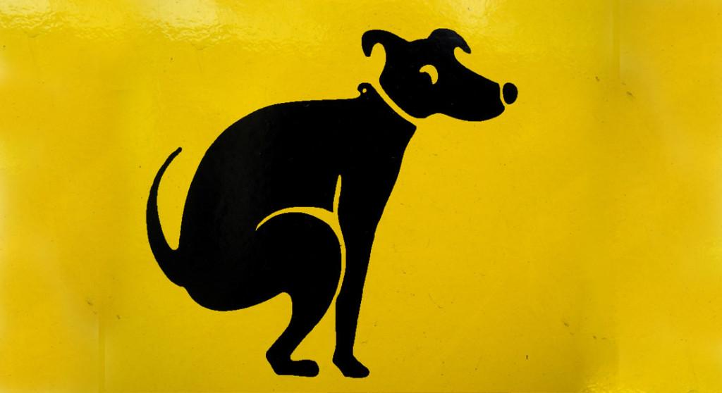 dog pooping yellow